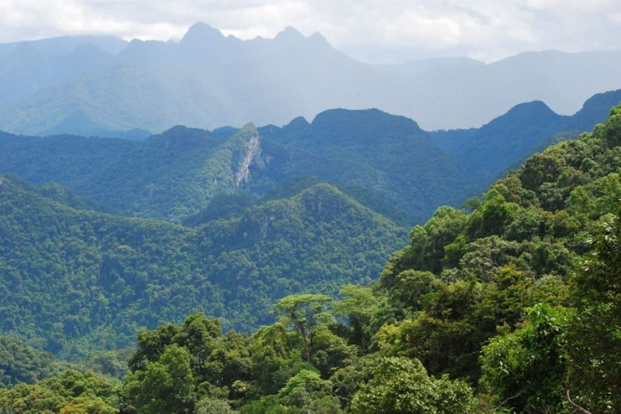 The Terrain in Vietnam : triple canopy jungle - memphite.com